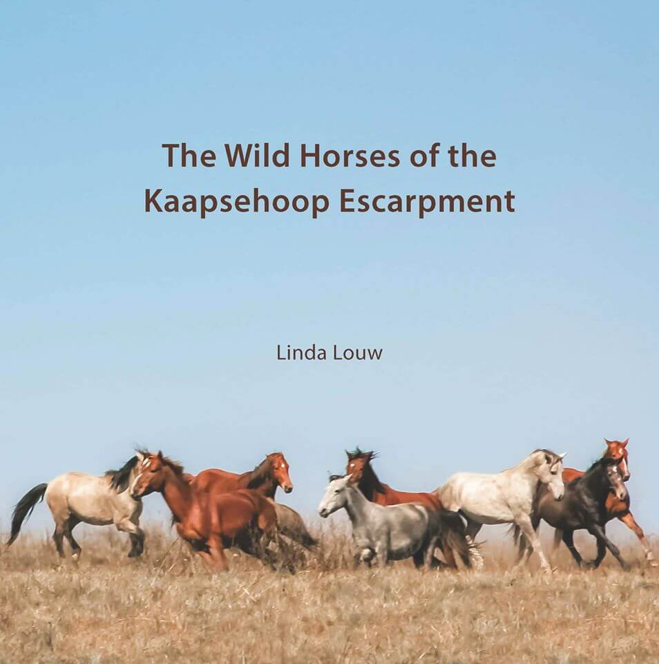 The Wild Horses of the Kaapsehoop Escarpment